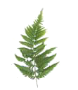 Fern Hill left fern frond